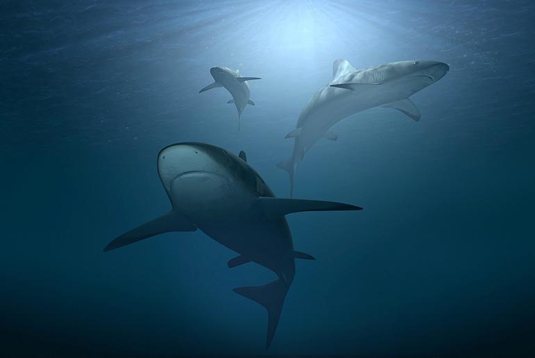 Gli squali sono meno pericolosi della scarsa conoscenza